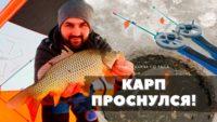Ловля карпа ранней весной со льда — Рыболовный дневник