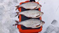 Ловля крупной плотвы на реке в марте - Рыбалка 68