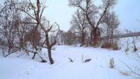 На микро-речку в марте - Павел Теплов