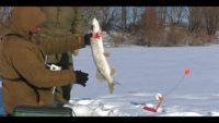Последний лёд - Рыбалка 62