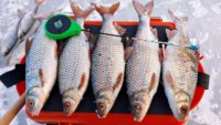 Простая рабочая снасть - Рыбалка 68