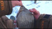 Рыбалка со льда в марте - Рыбалка 62