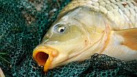 Самодельная насадка на мирную рыбу