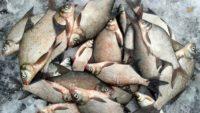 Самые лучшие рецепты прикормки для зимней рыбалки