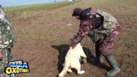 Дрессировка собак по апортировке. Лабрадоры — Приключения рыбака и охотника