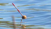 Ловля плотвы на поплавок в мае - Рыбалка на реке