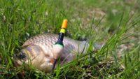 Поплавок на карася — Самодельная рыбалка