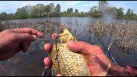 Ловля карася на поплавок - Рыбалка 62