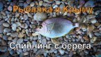 Июльский морской карась в Крыму