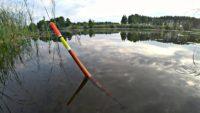 Ловля карпа и  карася на поплавок на утренней зорьке - Рыбалка 68