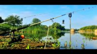 Охота на дикого речного сазана - Дневник рыболова