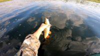 Голавль на ультралайт — Рыбалка на реке