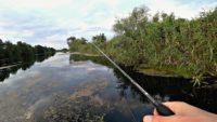 Дикие поклевки крупняка - Рыбалка 68