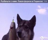 """Видео """"Рыбачьте с нами"""" - Ловля форели в Подмосковье"""