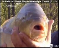 "Видео ""Рыбачьте с нами"" - Медвежьи озёра. Сазан"