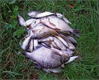 fish4men.ru
