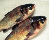 Критерий свежести рыбы