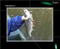 """Видео """"Рыбачьте с нами"""" - Ловля жереха"""