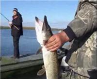 Видео «Рыбачьте с нами» — Дельта Волги. Раскаты. Окунь, щука