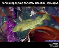 """Видео """"Диалоги о рыбалке"""" - Калининградская область - Балтийское море, поселок Приморье. Камбала. Часть 1"""
