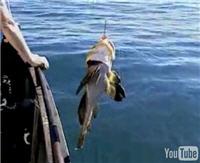 "Видео ""Диалоги о рыбалке"" - Камчатка. Бычок"