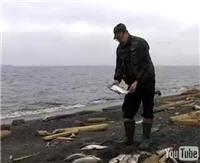 """Видео """"Диалоги о рыбалке"""" - Карское море. о. Диксон. Омуль"""