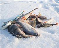 Южный лед. День на Карповском водохранилище