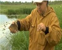 Видео «Сибирская рыбалка». Выпуск 11. Крупный карась
