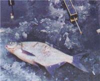 Предвесенняя ловля леща на Селигере