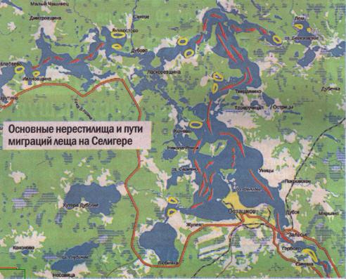 Список мест нереста рыбы на озере селигер