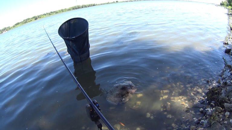 рыбалка на удочку в арендованных водоемах