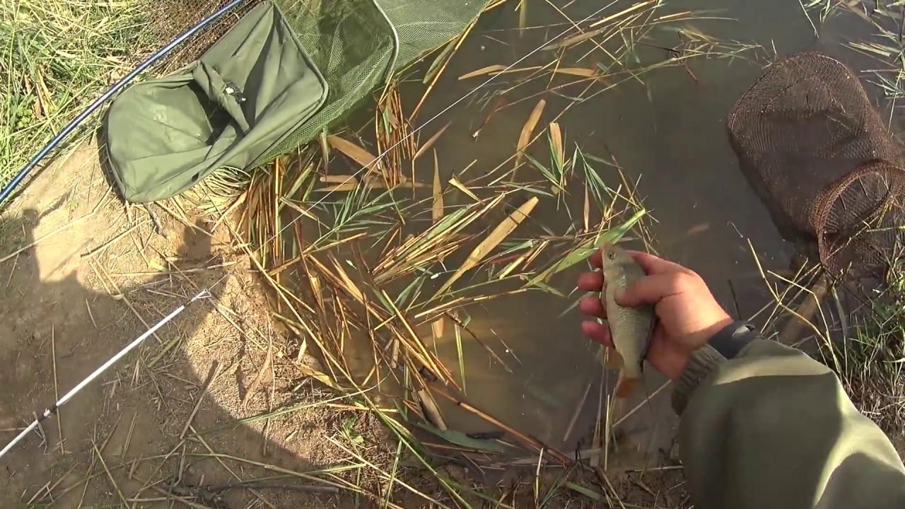 Ловля сазана на фидер видео
