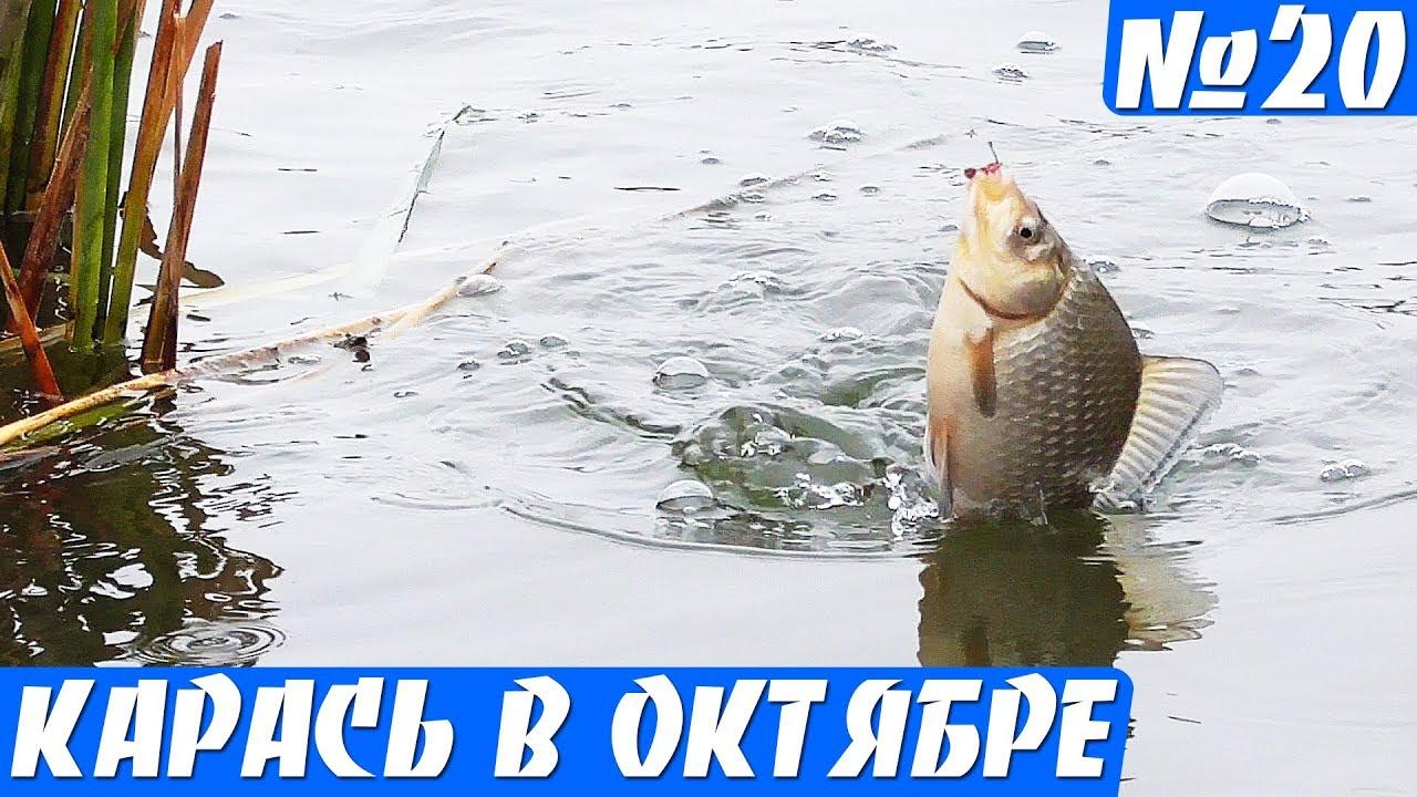 клев белой рыбы в октябре